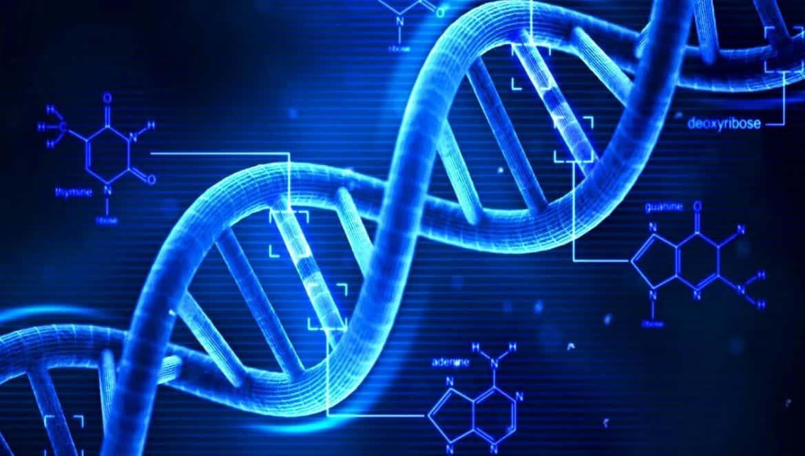 العلماء يعثرون على أدلة مرتبطة بالحمض النووي تظهر كيف يتطور البشر الآن