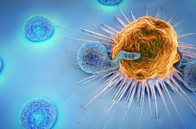 ما العلاقة بين الجهاز المناعي والسرطان؟ مساهمة الجهاز المناعي في محاربة السرطان - ما هي الحماية المناعية الفطرية؟ الخلايا السرطانية