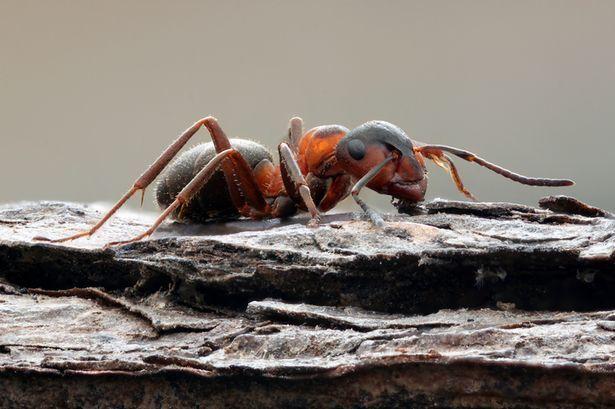 تمكُّن النمل المحجوز في مستودع نووي سوفيتي من النجاة بطريقة مرعبة جدًا!