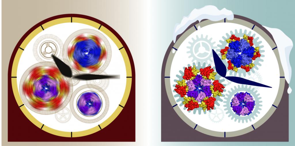 اكتشاف مبدا عمل واحدة من اقدم الساعات البيولوجية المهمة للحياة