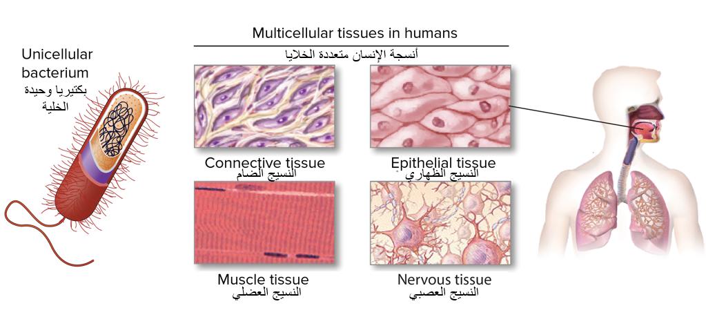 ما التعريف العلمي للحياة - البيولوجيا هو العلم الذي يهتم بدراسة الأشياء والكائنات الحية - الكائنات وحيدة الخلايا - الكائنات الحية