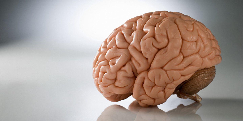 دراسة تكشف أنّ هذه الوظائف الدماغية لا تتأثّر بالجنس أو النوع