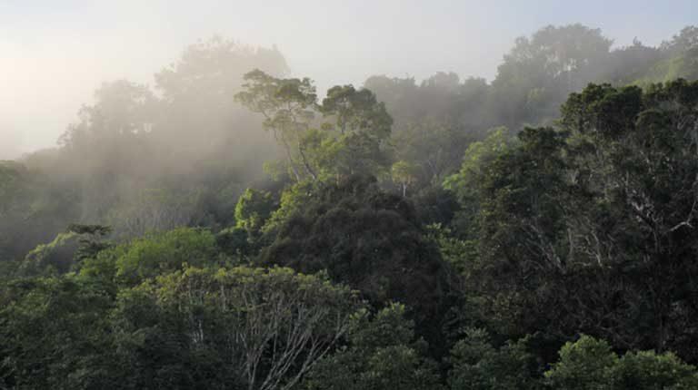 أطول أشجار الأمازون تنمو  50% أكثر من المعتاد والعلماء لا يعلمون السبب