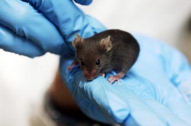 الفئران الأشعة نحن الحمراء الضوء المرئي الرؤية الليلية