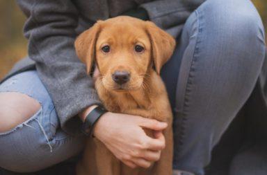 ست فوائد نفسية لامتلاك حيوان أليف - الفوائد الصحية لاقتناء الحيوانات الأليفة - القطط والكلاب والهامستر والطيور - لماذا يلجأ البعض لتربية الحيوانات في المنزل