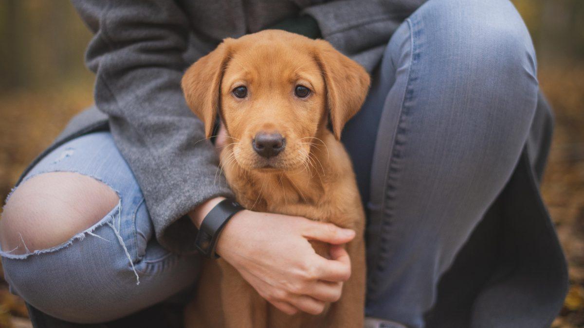 ست فوائد نفسية لامتلاك حيوان أليف
