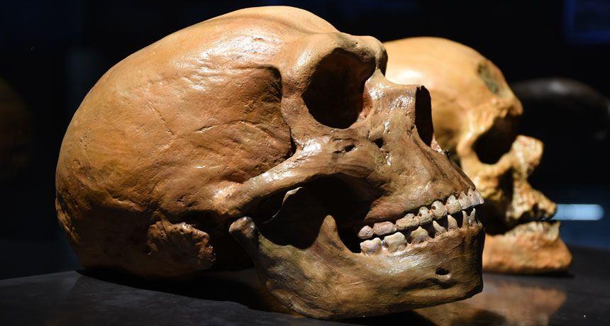 """التزاوج مع إنسان نياندرتال أعاد إدخال الـ DNA  """"المفقود"""" إلى الإنسان الحديث"""