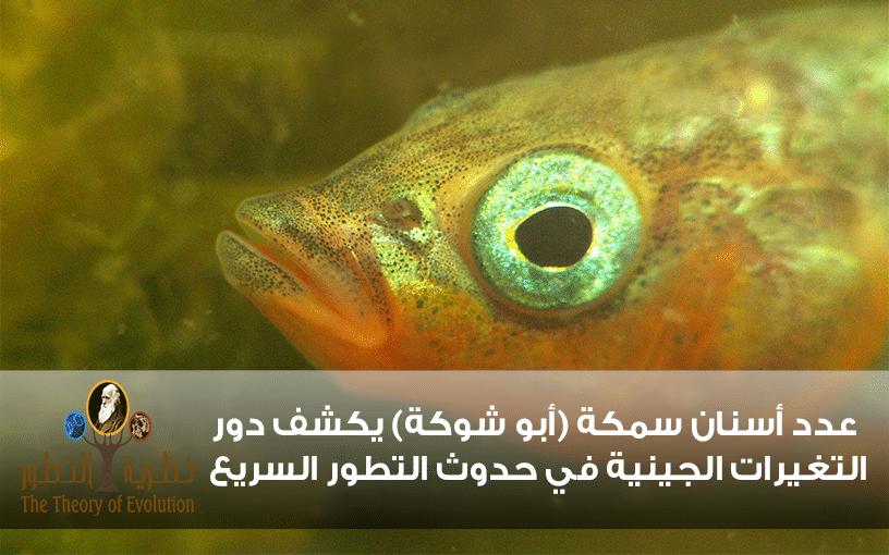 عدد أسنان سمكة (أبو شوكة) يكشف دور التغيرات الجينية في حدوث التطور السريع