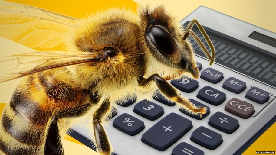 النحل يستخدم الرموز التجريدية لحل مسائل رياضية معقدة