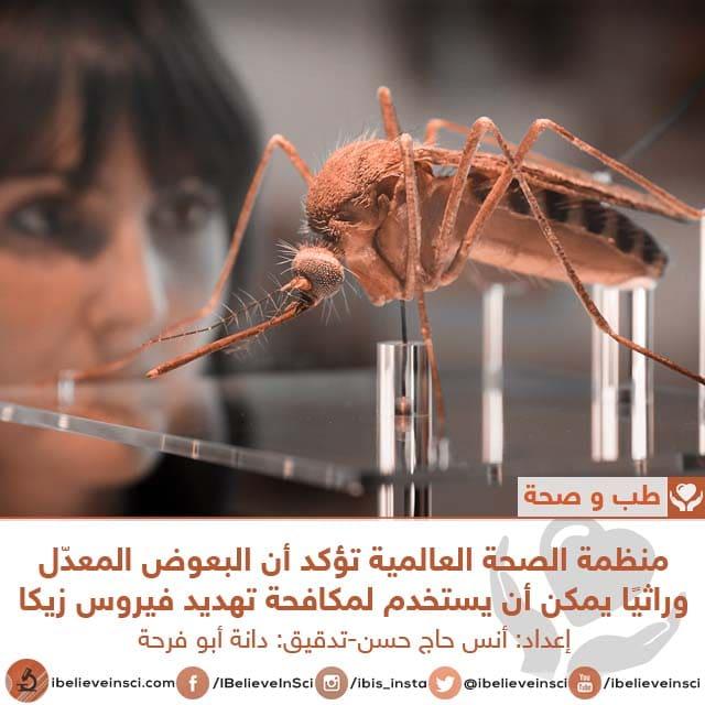 منظمة الصحة العالمية تؤكد أن البعوض المعدّل وراثيًا يمكن أن يستخدم لمكافحة تهديد فيروس زيكا