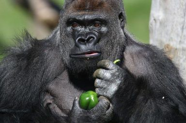 ما هي الحيوانات العاشبة الحيوانات آكلة اللحوم آكلات النباتات الجهاز الهضمية النباتات العشبية أنواع الحيوانات العاشبة الاختلافات في الجهاز الهضمي