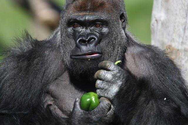 الحيوانات العاشبة: ما أنواعها وأحجامها ودورها في السلسلة الغذائية؟