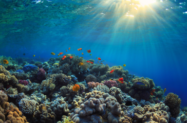 مسح قاع البحر يظهر أن المحيطات تشهد تغيرًا لم يحدث منذ 10 آلاف عام - دورة المحيطات - تغير النظام البيئي للمحيط الأطلسي - الغلاف الجوي