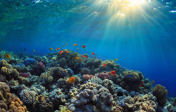 مسح قاع البحر يُظهر أن المحيطات تشهد تغيرًا لم يحدث منذ 10 آلاف عام