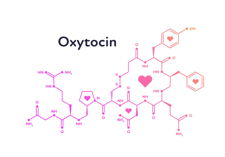 الأوكسيتوسين هو مركب معقد ينتج في الدماغ، وهو معدل عصبي - هرمون الحب هل يسبب العدوانية - تفعيل خلايا عصبية محددة في الدماغ