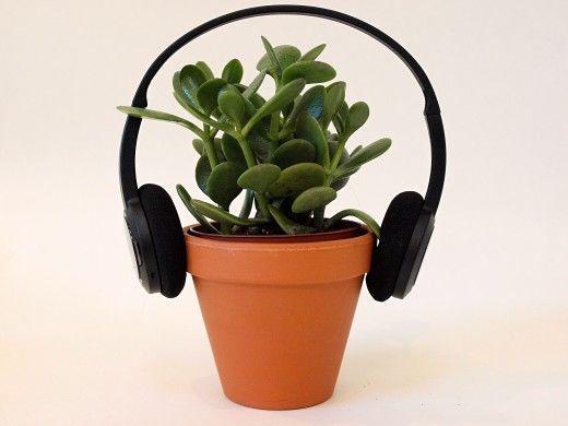 هل تسمع النباتات ؟