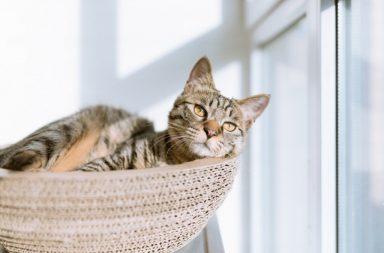 هل تملك حيوانًا أليفًا في منزلك؟ إليك أربع نصائح يقدمها العلماء ليبقى قطك المنزلي سعيدًا ومليئًا بالصحة - تربية القطط - الحيوانات الأليفة