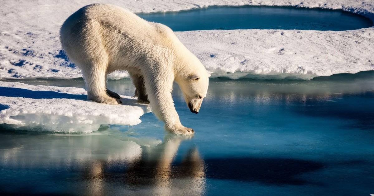 من المحتمل أن يذوب جليد المحيط المتجمد الشمالي في 2035 - الظروف المناخية الحالية للكرة الأرضية - ذوبان جليد القطب الشمالي للأرض - البحر الجليدي