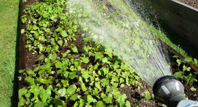 التوقيت الأمثل لري النباتات خلال موجات الحر