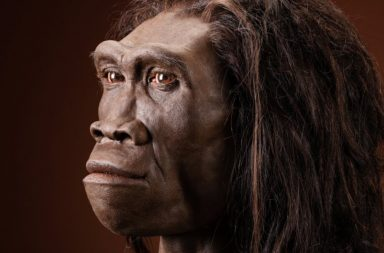 عانى سلف الإنسان هذا موتًا جماعيًا بشكل مفاجئ قبل مئة ألف سنة تقريبًا - غطاءً عملاقًا من العظام مخفيًا على ضفاف نهر السولو - الإنسان المنتصب
