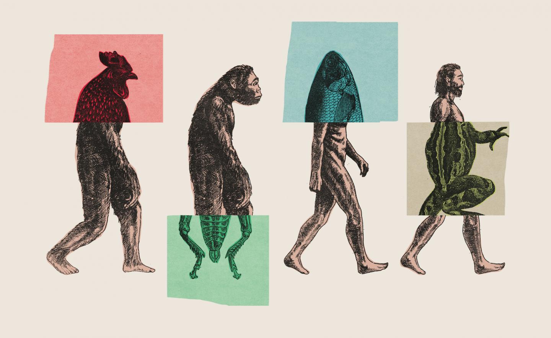 الصورة التقليدية التي يستخدمها الجميع لتوضيح نظرية التطور خاطئة
