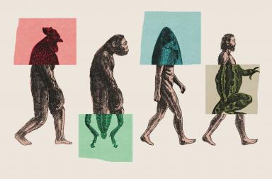 الصورة التقليدية التي يستخدمها الجميع لتوضيح نظرية التطور خاطئة - إضافة ميزات جديدة للكائنات الحية وزيادة تعقيدها - إضافة جينات جديدة