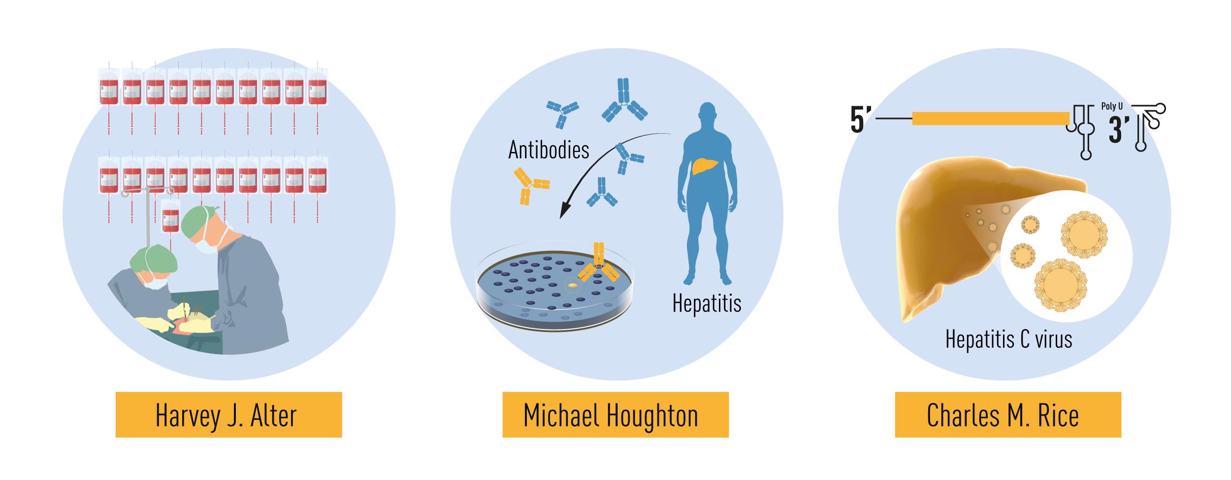 تلخيص للاكتشافات التي كوفئت بجائزة نوبل هذه السنة. الدراسات المنهجية لالتهاب الكبد المرتبط بنقل الدم التي أجراها هارفي آلتر وأظهرت أن فيروسًا غير معروف كان سببًا شائعًا لالتهاب الكبد المزمن. أبحاث مايكل هيوتون التي استخدم فيها استراتيجية جديدة لعزل جينوم الفيروس المسمى فيروس التهاب الكبد C. وأخيرًا تقديم تشارلز رايس الدليل النهائي الذي يبين أن فيروس التهاب الكبد C قد يسبب التهاب الكبد وحده