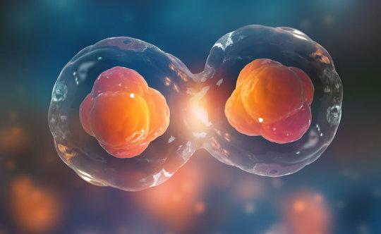 العلماء يتوصلون إلى وصف دقيق لكل خلية من خلايا الجنين في مراحله المبكرة - وصف كامل للمراحل المبكرة من تطور الجنين - مجال علم الوراثة المتعلق بالنمو