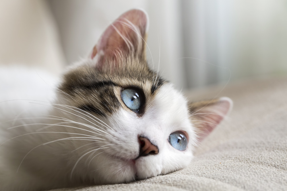 هل تهتم القطط في حال تخليك عنها؟