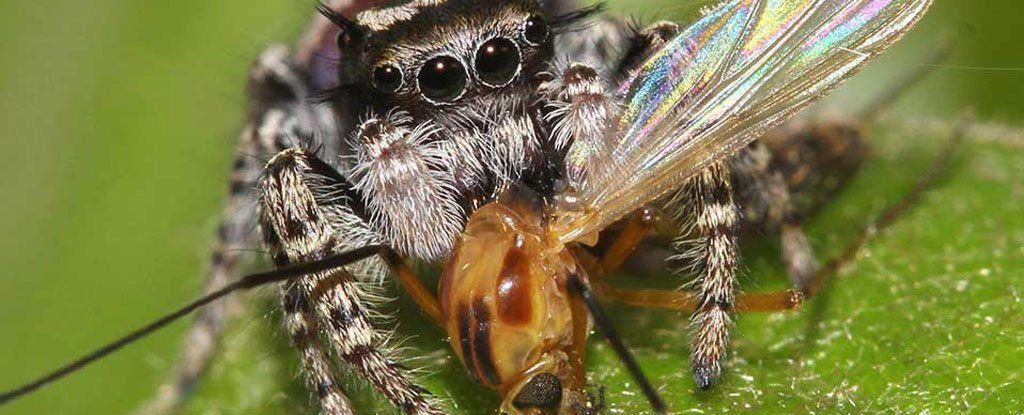 اذا كنت تظن ان البشر ياكلون الكثير من الحيوانات ، فعليك النظر الى ما ترتكبه العناكب