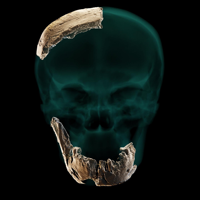 اكتشاف إحدى الحلقات المفقودة في أحجية التطور البشري