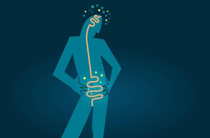 كيف تؤثر الإشارات القادمة من الأمعاء في الذاكرة؟