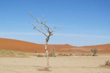 التصحر - ما هو النظام البيئي؟ مما يتكون وما هي عوامل الخطر عليه