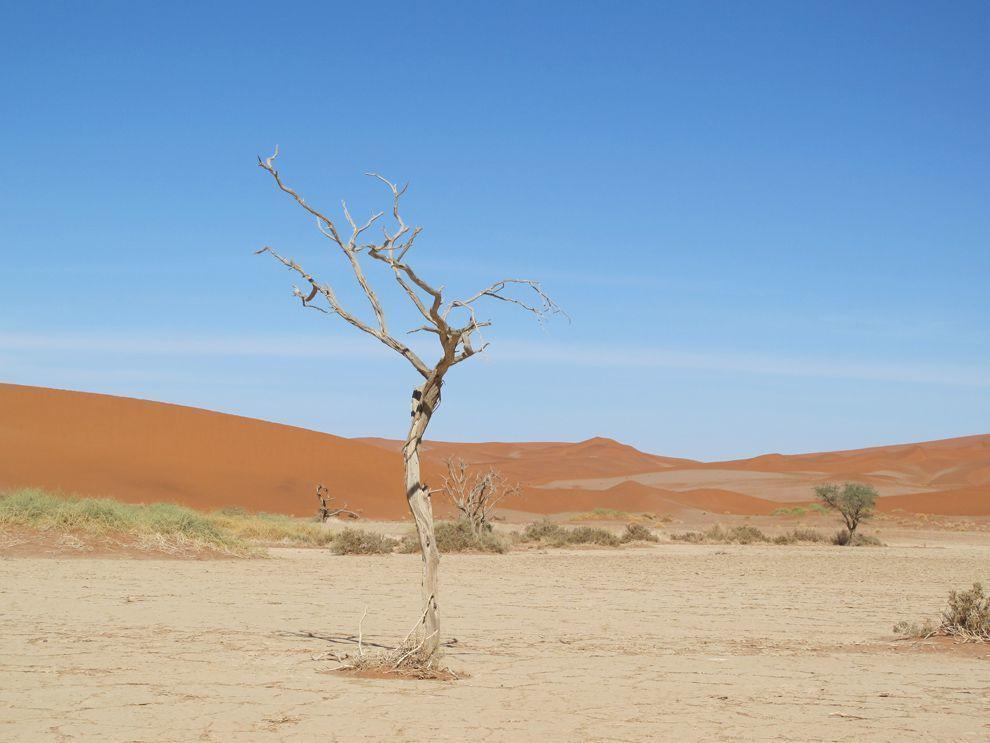 ما هو النظام البيئي؟ مما يتكون وما هي عوامل الخطر عليه