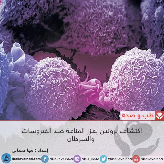 اكتشاف بروتين يعزز المناعة ضد الفيروسات والسرطان