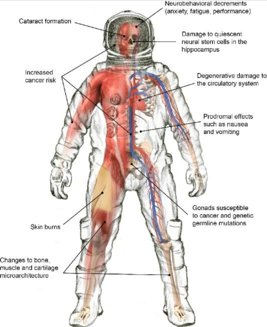 تأثير الفضاء المفتوح في الجسم البشري