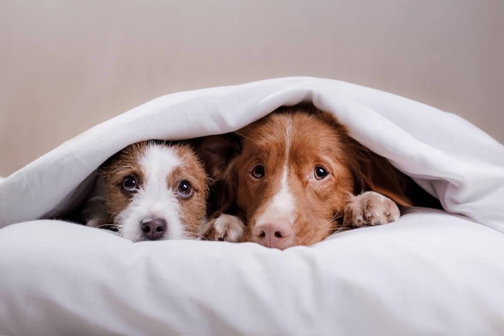 هل يمكن للكلاب أن تستشعر الخوف البشري والحالة العاطفية - هل تستطيع الكلاب تحديد حالتنا العاطفية عبر الرائحة وحدها - حاسة الشم لدى الكلاب