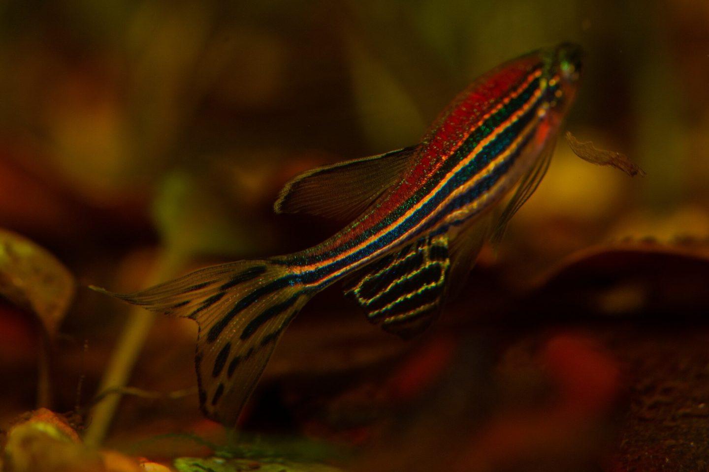 مورثات مشتركة مع الأسماك تلهم العلماء لإصلاح تلف شبكية العين
