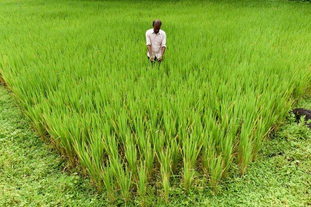 تأثير تغير المناخ في المحاصيل الزراعية