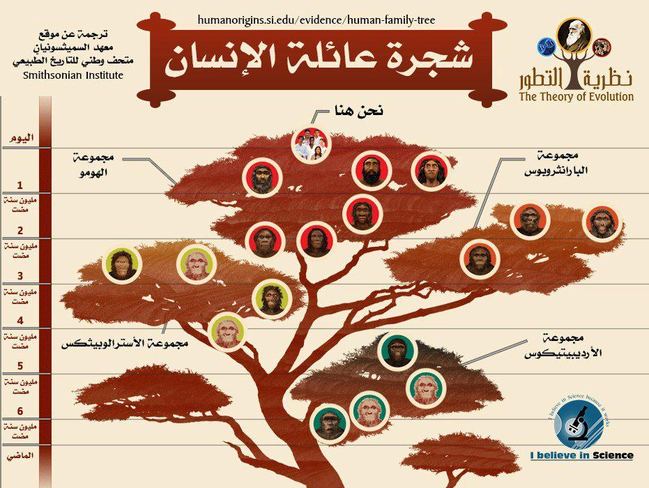 شجرة عائلة الانسان (اضغط للتكبير)