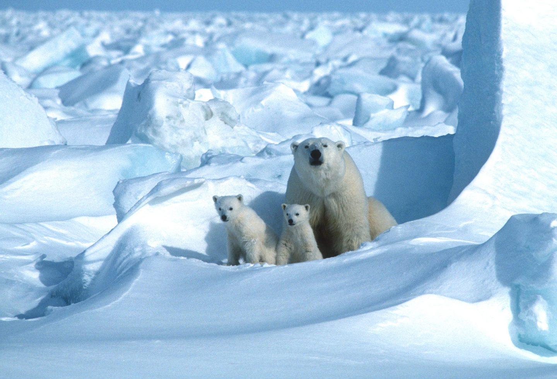 أثر ذوبان الجليد في المناخ