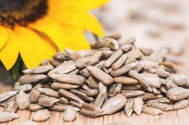 ما فوائد بذور عباد الشمس وما مضارها؟ وهل تزيد الوزن؟ - صناعة الوجبات المغذية عالية الطاقة - وجبة خفيفة كونها غنية بالدهون الصحية ومكونات نباتية مفيدة