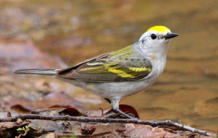 اكتشاف ثلاثة أنواع لنفس الطائر في ظاهرة لم يشهدها العلماء من قبل