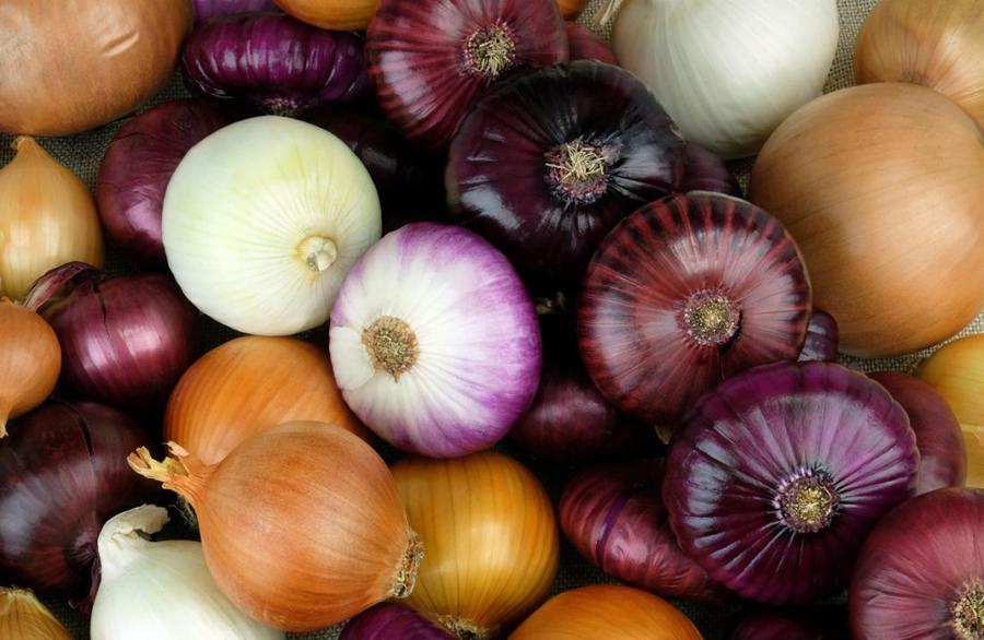 لماذا يعد البصل مفيدًا لصحتك - عائلة النباتات الثومية - فصيلة الزنبقيات - البصل الأحمر والأصفر والأبيض - ضبط ضغط الدم - القيمة الغذائية للبصل