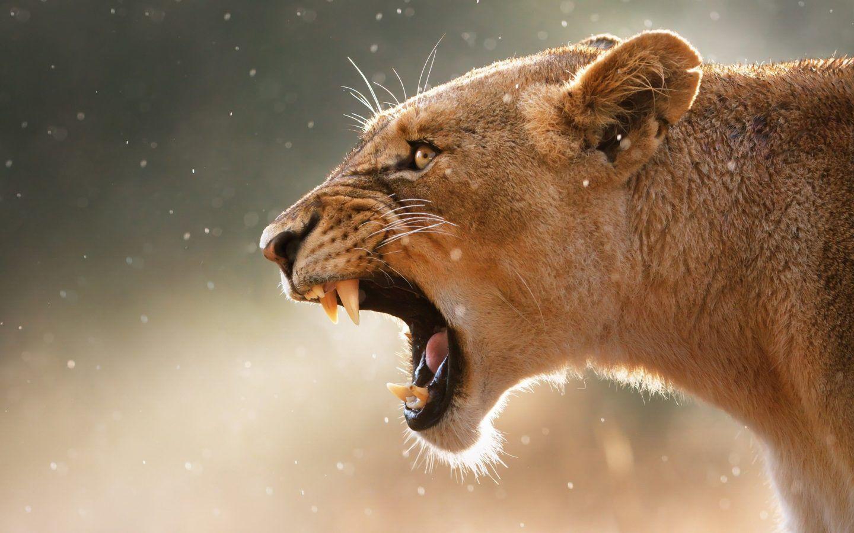 أخطر تسع إناث في مملكة الحيوان