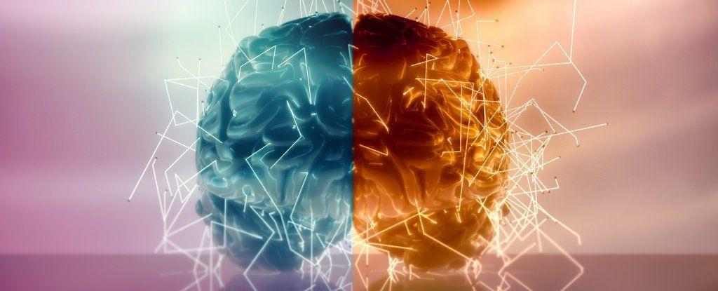 مفاجأة تنسف ما اعتقدناه عن تحكّم الدماغ بالجانبين الأيمن والأيسر من الجسم