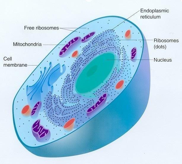 ما هي الخلية ؟