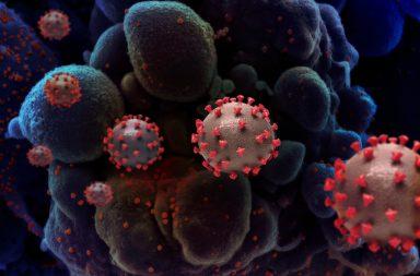 متغاير جديد من فيروس كورونا يهيمن على العدوى عالميًا - البروتينات الشوكية التي يستخدمها الفيروس لدخول الخلية البشرية - جينوم فيروس كورونا