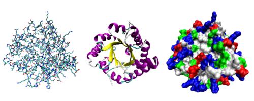 هل ب امكاننا التنبؤ ب التغير التطوري على المستوى الجزيئي ؟
