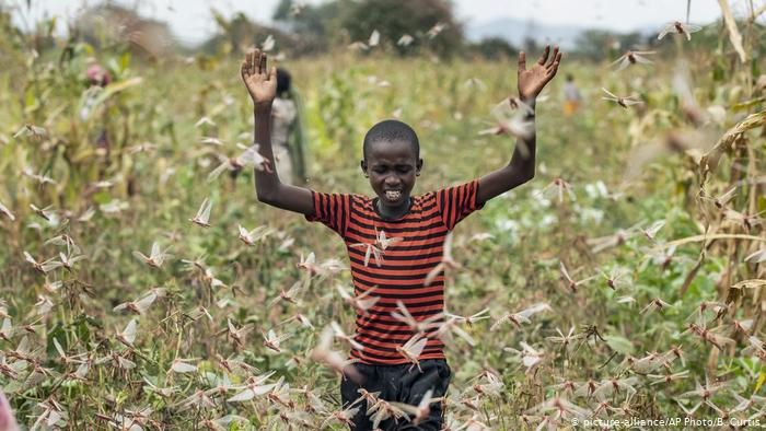 وباء جديد من الجراد هو الأسوأ منذ عقود يهدد بتدمير المحاصيل في إفريقيا